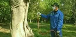 夏季家中灭鼠防虫的方法